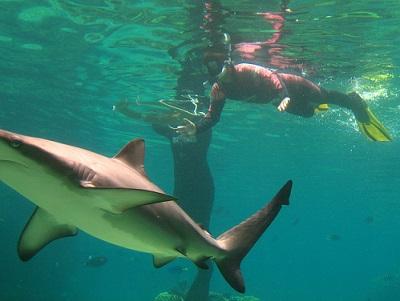 Shark and Ali at Seaworld