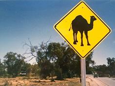 Camel Road Sign