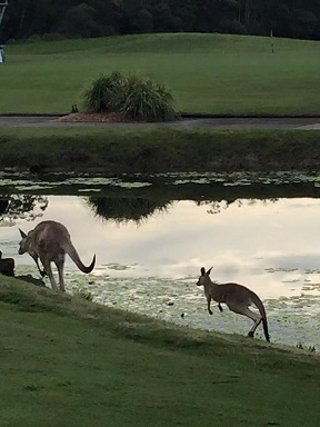 Roos on Golf Course